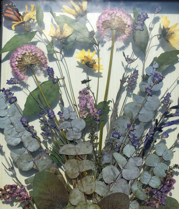 Pressed dried flowers