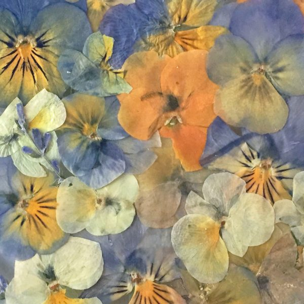 Pansies Pressed Flowers