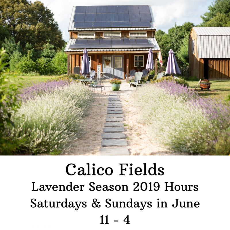 Calico Fields - Lavender Farm on the Eastern Shore of Maryland -
